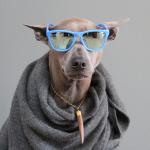 Life as an Office Dog